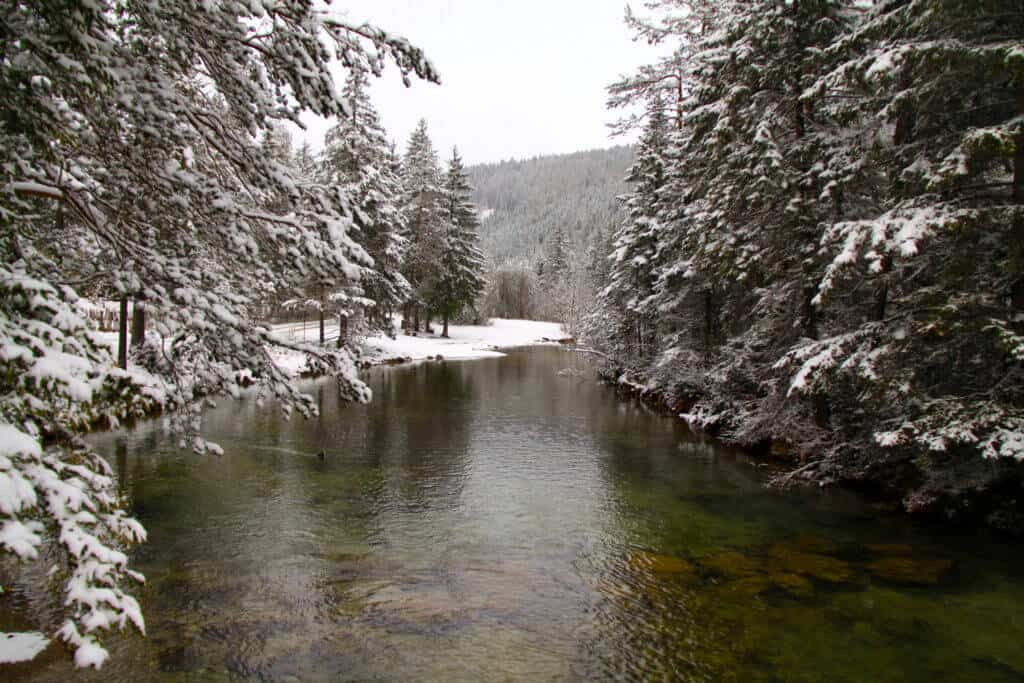 A river with trees covered in snow on either side.