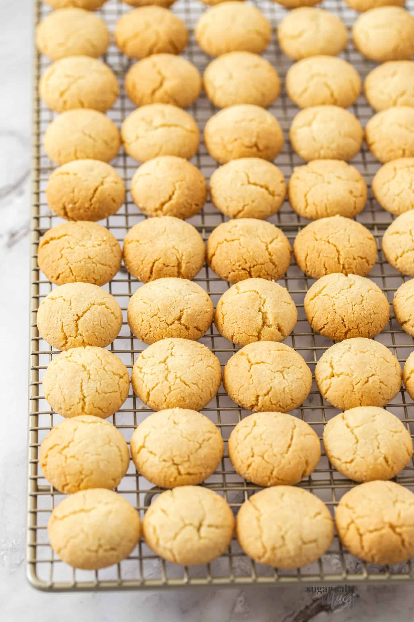 Small rounded cookies lined up on a cooling rack.